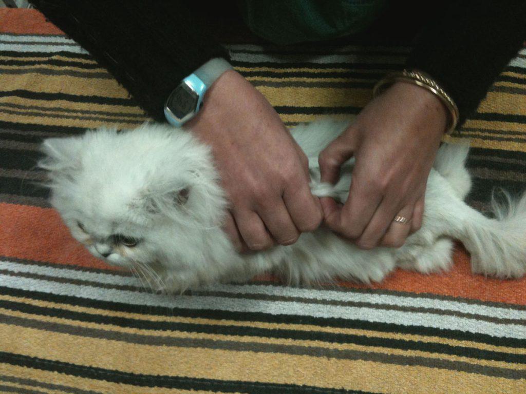 Kinévéto, Dr Agnès Laget vétérinaire, physiothérapie, phytothérapie, acupuncture, médecine complémentaire, atelier, pour animal domestique, chien, chat ...