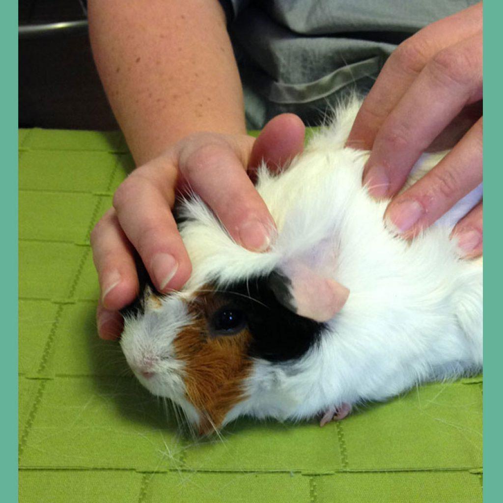 Kinévéto, Dr Agnès Laget vétérinaire ,ostéopathie, physiothérapie, phytothérapie, acupuncture, médecine complémentaire pour animal domestique, chien, chat ...